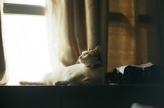 15397706_280953558968957_1590156412_o (JaS Photoland) Tags: film canonae1 lomookc675mmf23 lomo cinelens cats macau kodak 200 kodakfilm