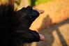 Want to catch myself....(私を捕まえたくて) (daigo harada(原田 大吾)) Tags: hand shadow 手 影 手袋 glove