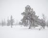 Lillådalen I (Gustaf_E) Tags: forest gördalen kväll landscape landskap lillådalen naturreservat pine pines skog snow snö sverige sweden tall vinter woods