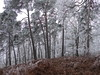 Forêt Domaniale de Rambouillet - Saint-Léger-en-Yvelines - Yvelines - Île-de-France - France (vanaspati1) Tags: vanaspati1 forest nature hiver givre frost arbres tree trees forêt domaniale de rambouillet saintlégerenyvelines yvelines îledefrance france