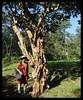 Tree Trunk (Indianature st2i) Tags: valparai tamilnadu tea teaestate indianature india indiragandhiwildlifesanctuary westernghats anamalaitigerreserve anamalais anamallais anaimallais anamalaiwildlifesanctuary 2016 2017