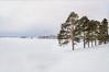 Silence (master Doratan) Tags: russia россия pine snow painting photoshop winter white tree