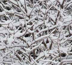 ** Abstraction hivernale ** (Impatience_1(retour progressif)) Tags: abstraction abstrait abstract hiver winter m impatience supershot coth coth5 abigfave fantasticnature alittlebeauty