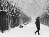 Schnee - Allee (pen3.de) Tags: omd em5 zuiko40150 allee schnee bäume menschen mann bänke sw bw schwarzweis gehen kopfhörer bewegungsunschärfe bewegung
