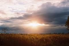 The last autumn sun ray (BogdanFilmshooter) Tags: filmgrain autumn 35mm analog film
