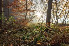 Morning Light (MSPhotography-Art) Tags: lichter night schwäbschealb deutschland landscape landschaft burg burghohenzollern germany outdoor natur clouds badenwürttemberg albtrauf wanderung wandern sterne swabianalb nature hohenzollern wolken alb