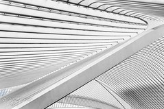 "Inside the manta  !  ""Liège Guillemins Belgique"" (Mike Y. Gyver ( Organize in Albums)) Tags: architecture artwork art abstract europe exploration liege belgium belgique pure aestethic myg mygphotographiewixsitecommyg2017 2017 calatrava railway station cityscape urban travel hss ngc"