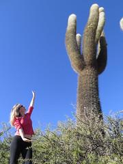 "Sacrée taille monsieur cactus <a style=""margin-left:10px; font-size:0.8em;"" href=""http://www.flickr.com/photos/83080376@N03/18434880909/"" target=""_blank"">@flickr</a>"