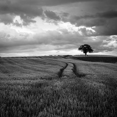 L'arbre seul (Martine Rodier) Tags: blackandwhite tree field landscape explore lonely