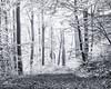 When the Light gets brighter you see more... (Ody on the mount) Tags: anlässe bäume em5 licht mzuiko6028 nebel omd pflanzen schwäbischealb wald wanderung wege bw monochrome sw sanktjohann badenwürttemberg deutschland de