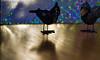 Do you wanna dance? 🎶 (Dotsy McCurly) Tags: chicks birds disco wanna dance bubbly bokeh dof focus fun funny macro closeup lens light lighting tabletop nikon d750 nj stilllife