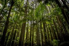 The problem with bushwalking. 365/366 (jenniferdudley) Tags: mountglorious mtglorious queensland canonaustralia canon5dmkiv canon5d canon trees forest rainforest bushwalking day365366 30dec16 366the2016edition 3662016