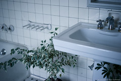 Old residence (DiscoloredBlueSummers) Tags: ilce7 α7 sony femount ilce7m2 α7ii fe55mmf18za sel55f18z indoor furniture interior bathroom plant