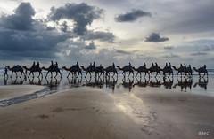 Cable Camels (Rob McC) Tags: sunset coast beach cameltrain camels reflections ocean sea seascape landscape cablebeach wa australia