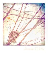 Winter nest. (jeanne.marie.) Tags: texture barren instant birdsnest nest