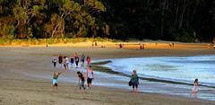 FUN in the SUN (Lani Elliott) Tags: beach water sea sand fun activity children playing handstand funonthebeach people dogs light trees foliage bush tasmania australia