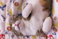 Pallina 1396 (Federico Basile FB Photo Images) Tags: gatto gatta gattina gattino gattini animale felino pallina cucciolo cucciola azione verde neve salto coccole fusa giochi cat smallcat cats cute sweet sweetcat