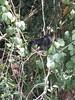 IMG_9025 (dstylebda) Tags: colonpanama gatunlake tamarins howlermonkeys sloth