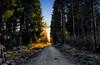 Walking alone (dieterein@ymail.com) Tags: back light bäume licht backlight gegenlicht wald