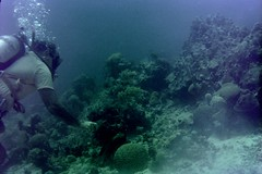 n0005.02 (avaragado) Tags: barbados coralreefclub fd197504 fd197604 fd197905 n0005 tonysmith