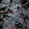 Freezing Over 010 (noahbw) Tags: captaindanielwrightwoods d5000 nikon abstract forest frozen ice landscape leaves natural noahbw square winter woods