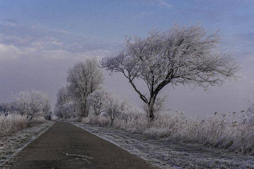 17.01 - 090245 Winter