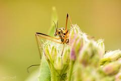 Rest (JDanyaloff) Tags: yellow insect macro macroworld nikon d610 tokina 100mm garden summer