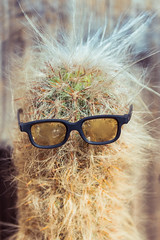Prick (Wayne Stadler Photography) Tags: fun towns oldwest attractions westewrn touristy pioneertown stores california ghosttowns glasses roadside cactus kitsch usa desert yuccavalley historic