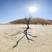Namibie - Dead Vlei - 22-04-2014 - 8h59