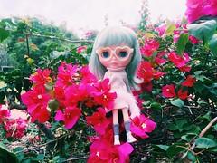 🌳🌳🌳 #bougainvillea #flower #naturelover #love #misssallyrice #blythe #doll #ミスサリーライス #ブライス #人形