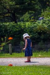 Little girl (Yorkey&Rin) Tags: summer japan tokyo july olympus littlegirl  rin hotday  2015 hamamatu sulfurcosmos em5   olympusm75300mmf4867ii pc236843