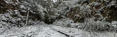 Never ending tunnel (JoshCHATT) Tags: winter snow nature quiet australia bluemountains nsw outback desolate
