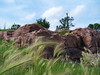 Grass And Red Rock (J Swanstrom (Never enough time...)) Tags: pink red grass rock stone kodak south falls sd dakota dx7590 quartzite sioux jswanstromphotography