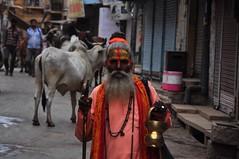 Sadhu, Jaisalmer (_Andrew_MacDonald_) Tags: india man holy ng jaisalmer rajasthan sadhu d90