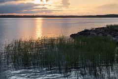 evening light┃DSC4875 (Anne Kaihola) Tags: sunset summer seascape suomi finland evening simo auringonlasku merimaisema nikond610 annekaihola