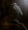 available light (hardy-gjK) Tags: heron reiher waterbird wasservogel light licht evening abend soir illumination hardy nikon lumière
