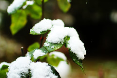 perfect snow (Katrinitsa) Tags: snow nature winter colors canon canoneosrebelt3i ef35mmf14lusm bokeh focus zoom landscape garden green white snowy dream inspiring inspiration inspired plants leaves trees tree dreamy joy happy happiness awesome amazing beauty beautiful greece athens glyfada perfect perfection covered