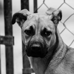 Winston17Dec1600106-Edit.jpg (fredstrobel) Tags: dogs pawsatanta phototype atlanta blackandwhite usa animals ga pets places pawsdogs decatur georgia unitedstates us