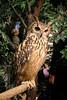 20161231-IMG_5055 (stringer8247) Tags: owl forest harajuku tokyo japan