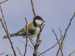 161211_GX7_1450873 (kuad9) Tags: bird