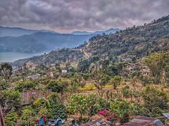 Mustard Gardens (Sarangkot, Nepal) (Louky Jac) Tags: sarangkot nepal earlymorningtrek