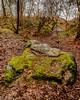 Heath Park and Runcorn Hill (8 of 8) (andyyoung37) Tags: frog runcorn runcornhill silhouette uk cheshire tree england unitedkingdom gb
