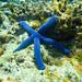 diving-tonga13