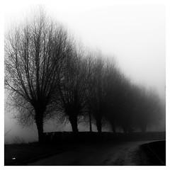 Foggy road.... (objet introuvable) Tags: blackandwhite nb noiretblanc nature road arbres trees brouillard branche fog contrast cadre lumixgx8 lignes lines perspective hiver hautsdefrance winter panasonic paysage lumix ambiance