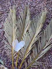 June 24, 2015 (2) (gaymay) Tags: california gay plant love happy desert heart palmsprings triad