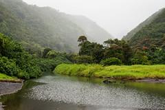 (Justin Rex93) Tags: 50mm prime blacksand hawaii nikon rainforest maui hanahighway d610 justinrex