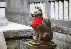 Fantastic Mr. Fox (rustyproof) Tags: japan religious tokyo shrine inari religion fox   spiritual shinto kitsune nezu
