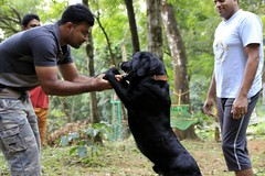 Blacky dog at Dare Nature Wayanad