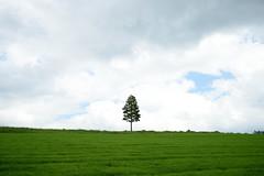 20150614 Hokkaido 4 (BONGURI) Tags: tree nikon df hokkaido observatory jp 北海道 日本 furano singletree 富良野 麓郷 富良野市 一本の木 rokugou 麓郷展望台 一本木 afsnikkor2485mmf3545gedvr rokugouobservatory