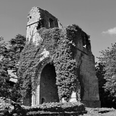 Three white doves, St. Mary's, Little Chart, Kent (Aliy) Tags: abandoned church kent ruins dove masonry ruin ivy holyrood stmary derelict doves abandonedchurch saintmary whitedove ruinedchurch whitedoves romanticruins littlechart derelictchurch romanticruin
